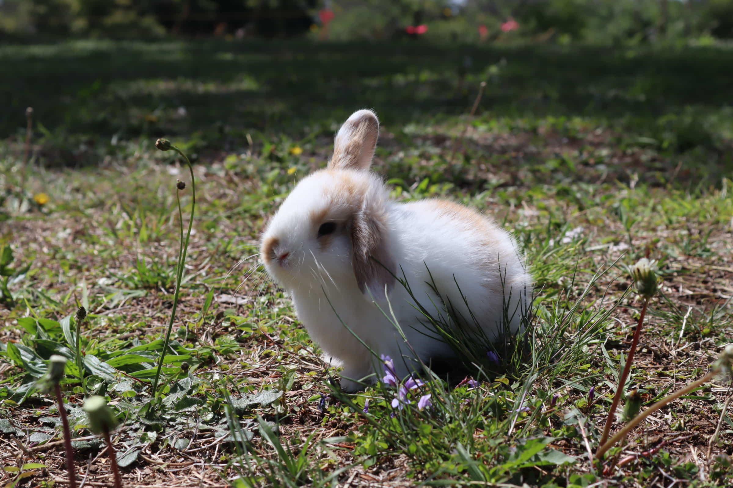 どんな行動でウサギは気持ちを表現をする?その喜怒哀楽を感じた私の体験談!