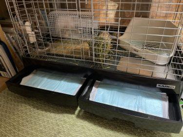 夏場は臭う?対策グッズは?ウサギのケージの掃除の方法!その頻度は?
