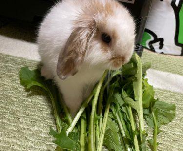 ウサギにとって快適な温度は?どんな暑さ対策のペット用品で乗り切る?野菜で水分補給をしよう