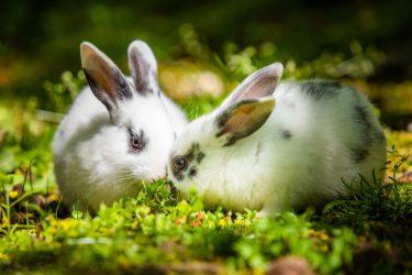 ウサギの気持ち理解度チェック!アナタは何問正解できる?ウサギシンクロニシティテスト