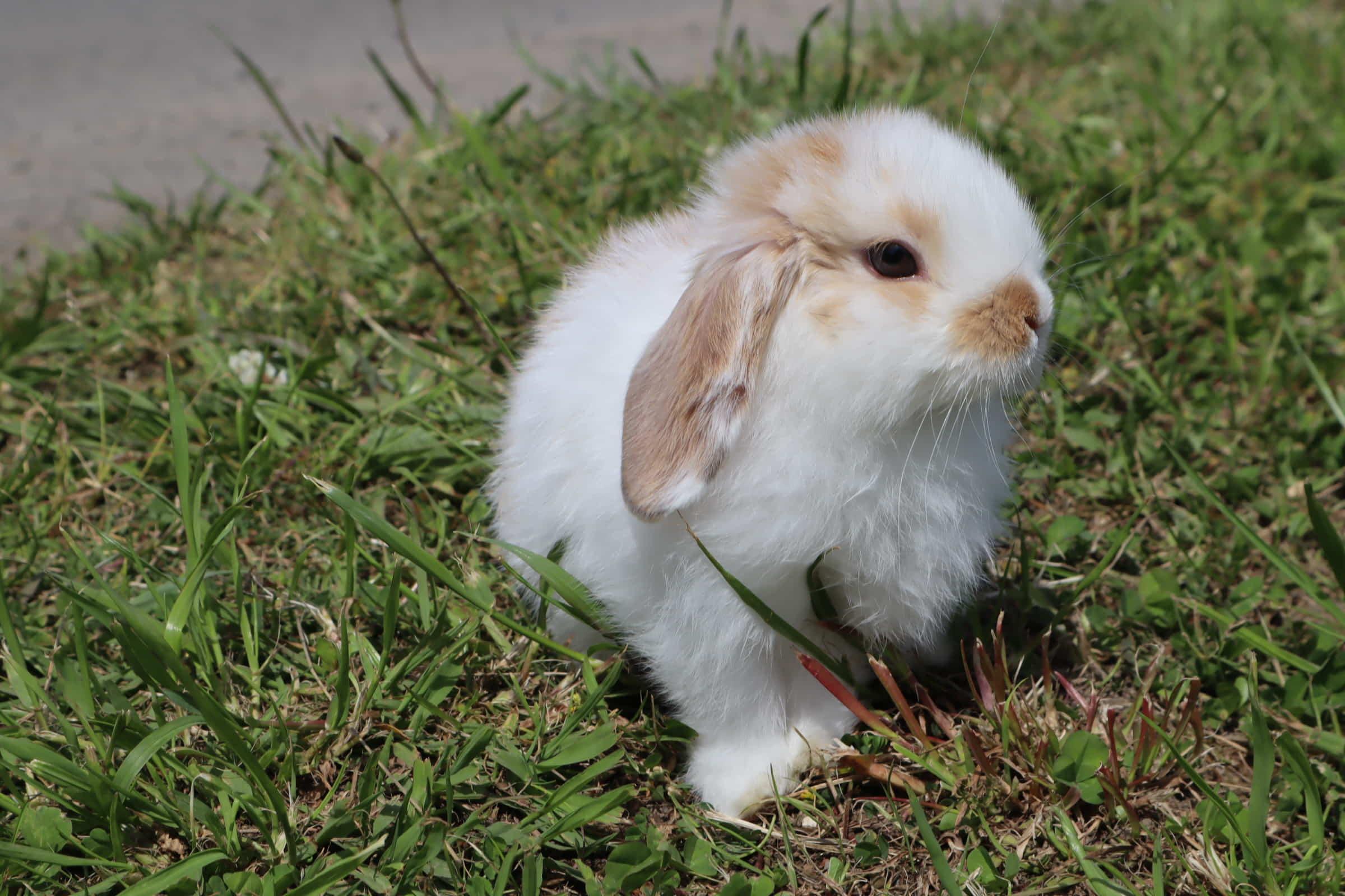 ウサギの名付けに悩んだら?お困り解決♪最新のおすすめ名前ランキング!ウサギは自分の名前を覚える?