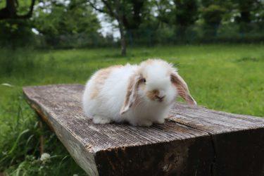 母性本能がそそられる!ものほしげに見つめてくるウサギ系男子の実態とは?
