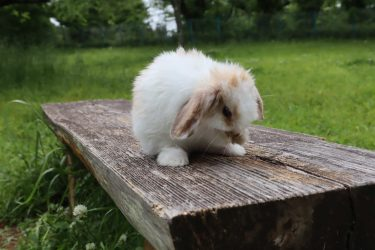 ウサギには、お風呂や水浴びは必要?砂浴びは?毛繕いの意味は?