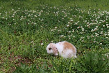 ウサギさんが食べれる野草特集!お散歩ついでに見つけてみよう♪与えすぎには要注意