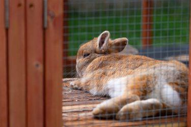 ウサギの気持ち理解度チェック!アナタは何問正解できる?ウサギシンクロニシティテストPart2