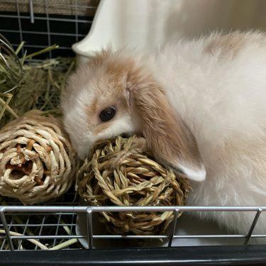 ウサギが噛む理由は?ウサギの心のサインを読み解いてみよう!