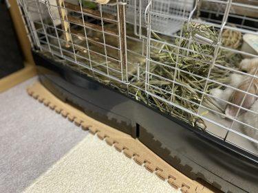 深夜に元気になるウサギの騒音対策は?ステンレス製のケージを齧る音、飛び跳ねる音。どんな対策が効果的?